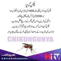 چکن گونیا ایک وائرس